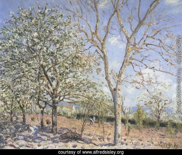 Plum and Walnut Trees in Spring