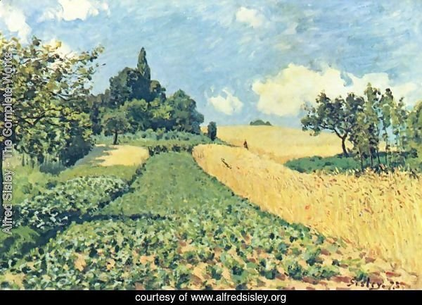 Grain fields on the hills of Argenteuil